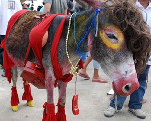 burro-dizfraz