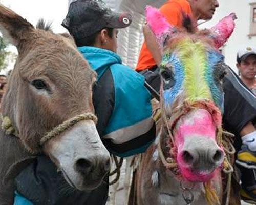 burro-dizfraz09