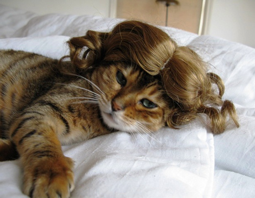peluca2