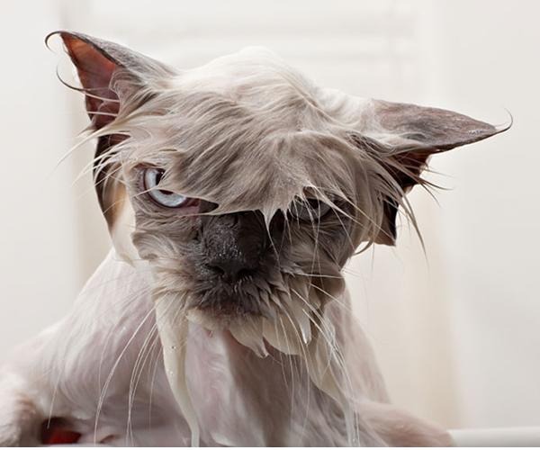 gatos-mojados-02
