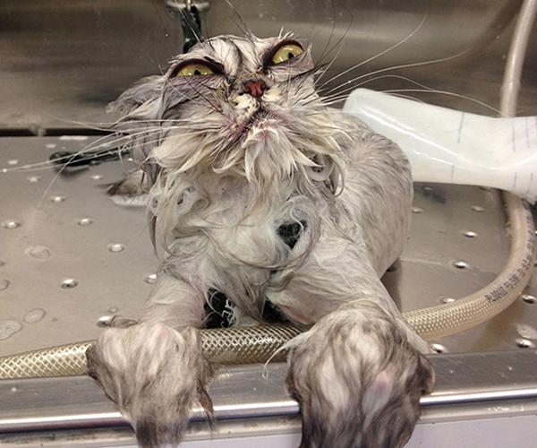 gatos-mojados-03