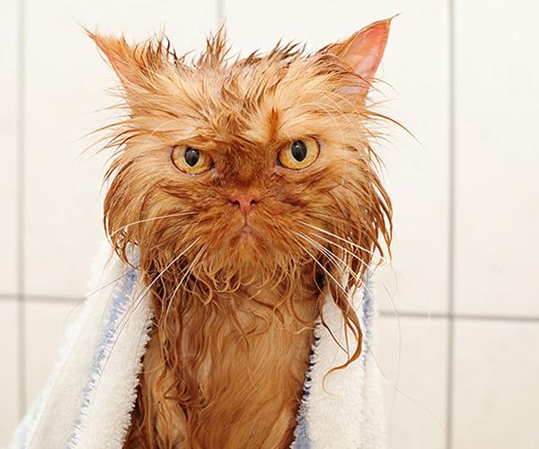 gatos-mojados-04
