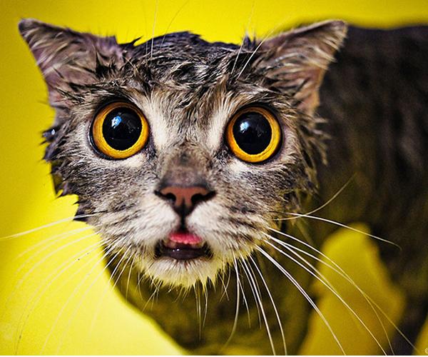 gatos-mojados-05