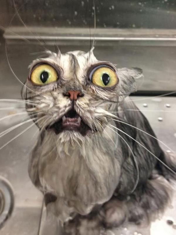 gatos-mojados-09