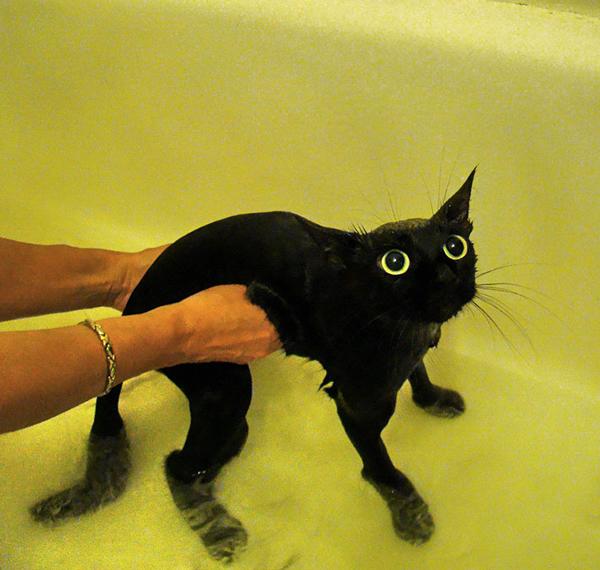 gatos-mojados-10