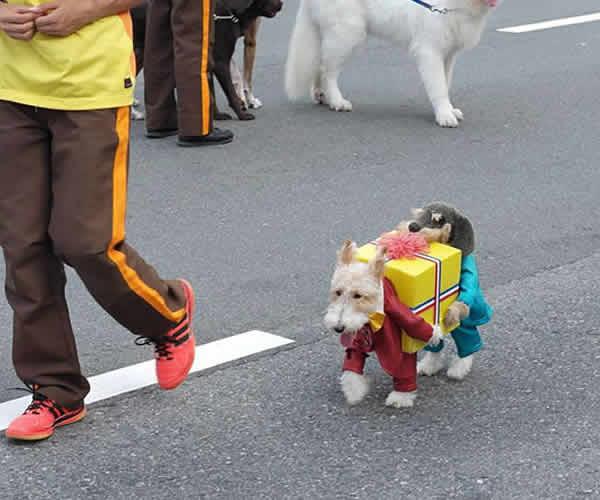 mascotas-disfrazadas-04