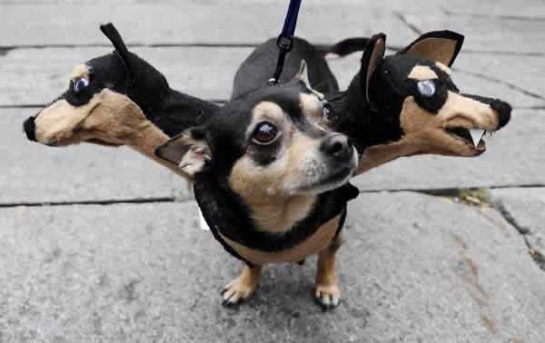 mascotas-disfrazadas-05