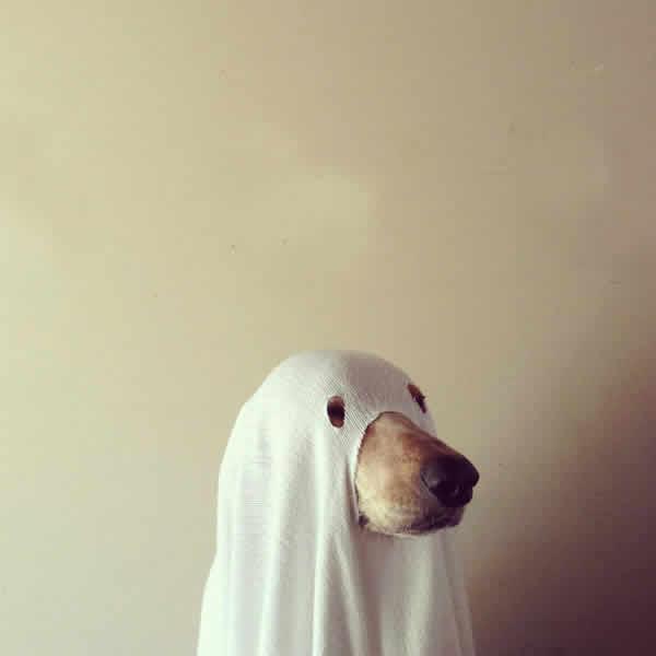 mascotas-disfrazadas-13