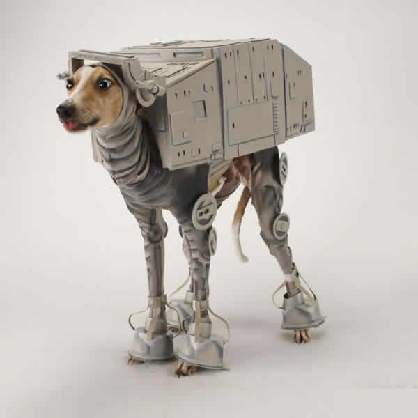mascotas-disfrazadas-15