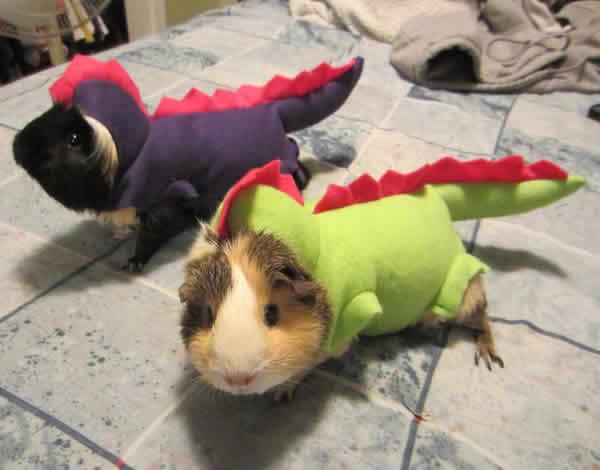 mascotas-disfrazadas-21
