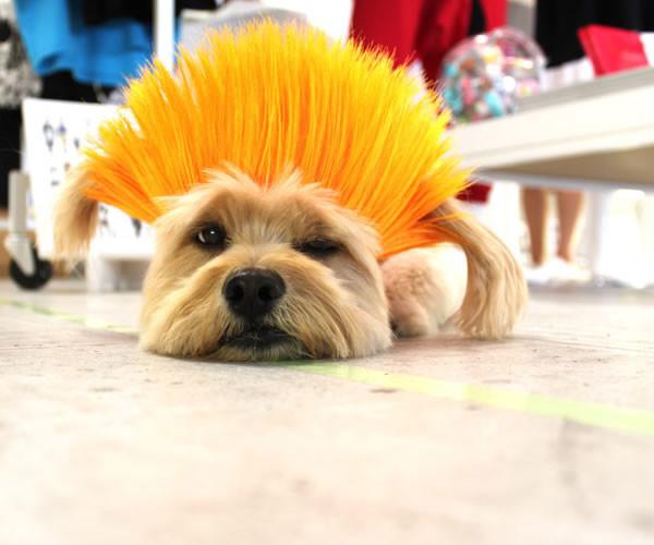 pelucas-mascotas-01-600x500