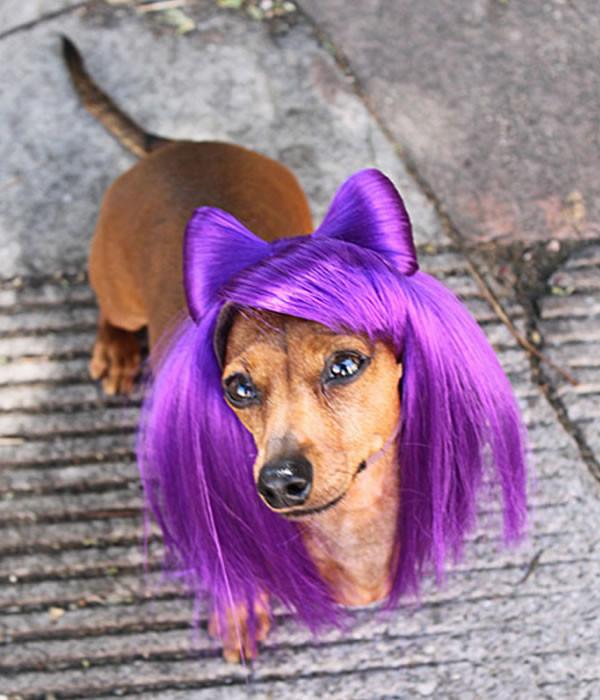 pelucas-mascotas-02-600x700