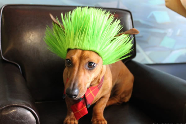 pelucas-mascotas-03-600x400