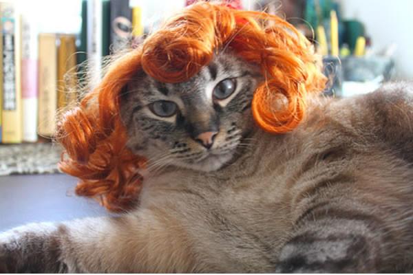 pelucas-mascotas-04-600x400