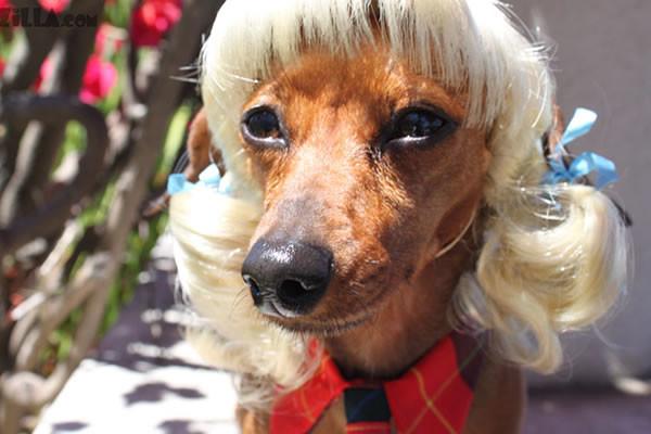 pelucas-mascotas-05-600x400