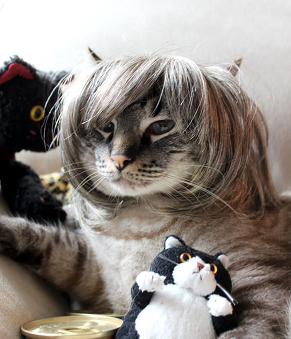 pelucas-mascotas-07-600x700
