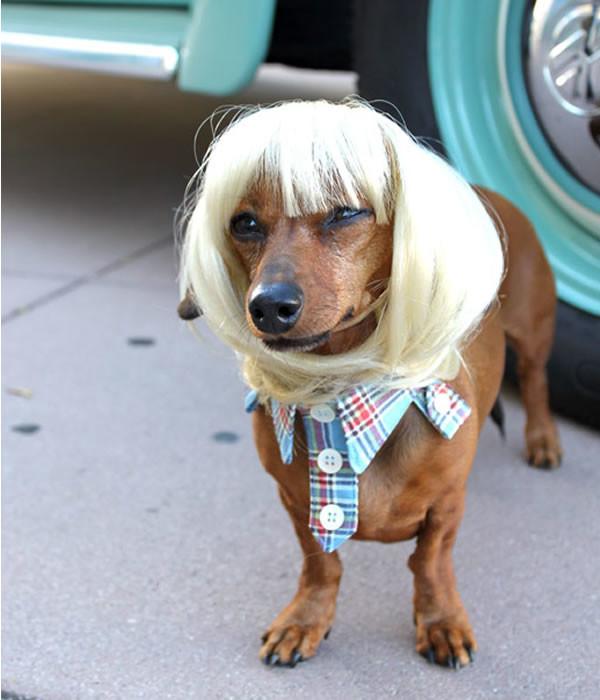 pelucas-mascotas-09-600x700