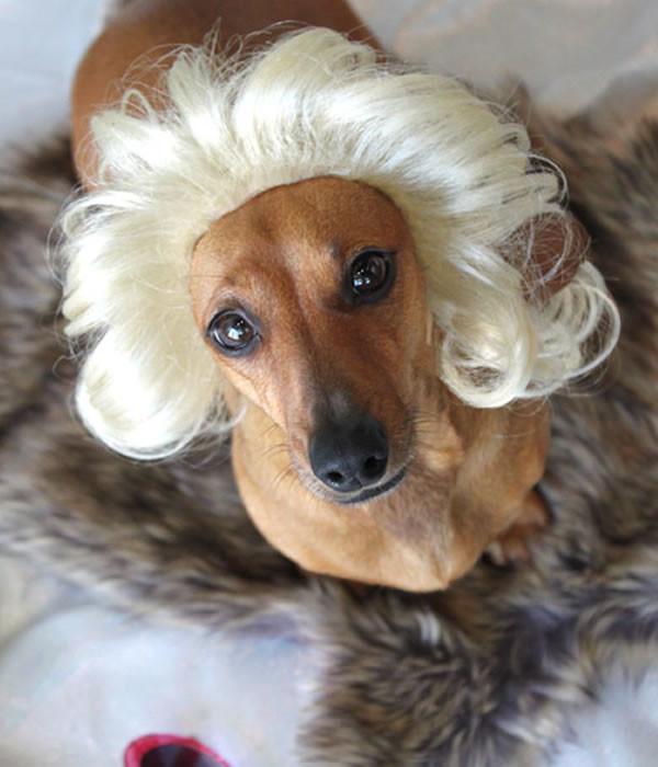 pelucas-mascotas-10-600x700