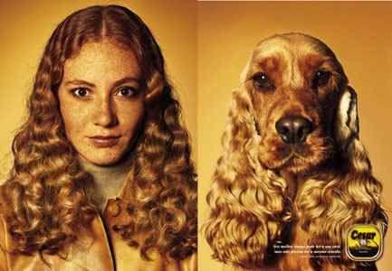 perros_y_duenos_2