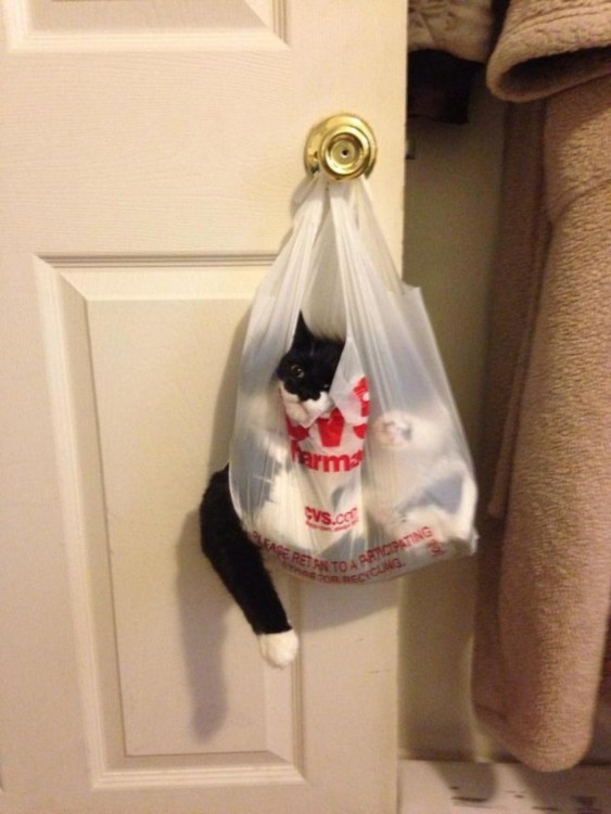 Gatos-atrapados-12-563x750