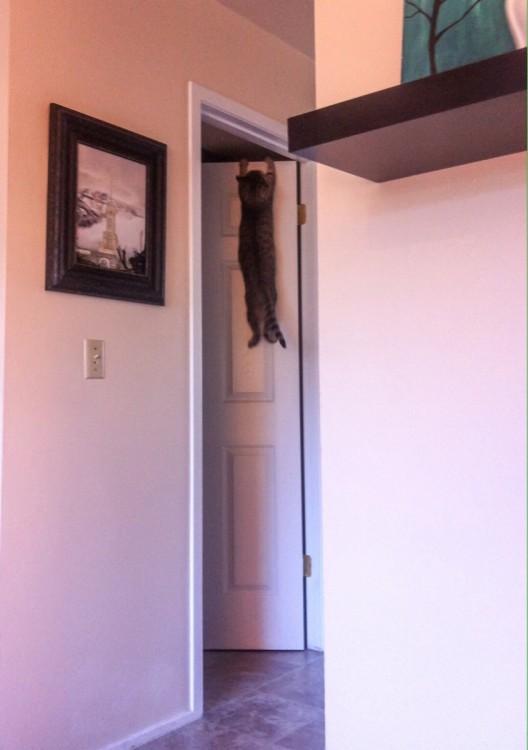 Gatos-atrapados-13-528x750