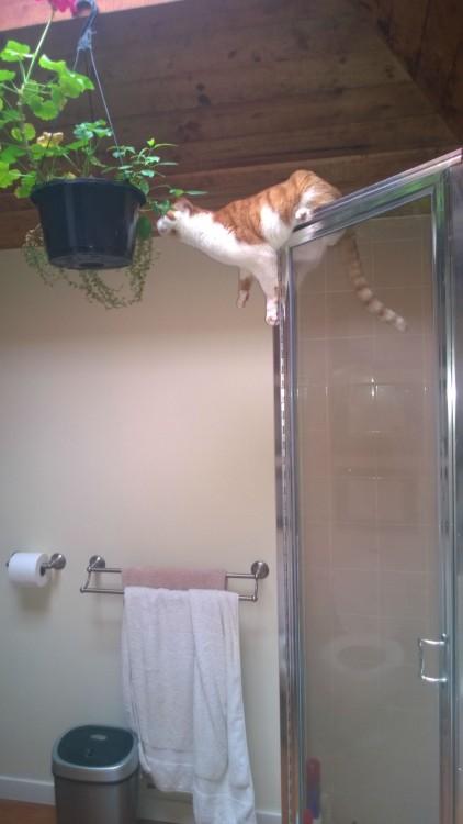 Gatos-atrapados-6-422x750