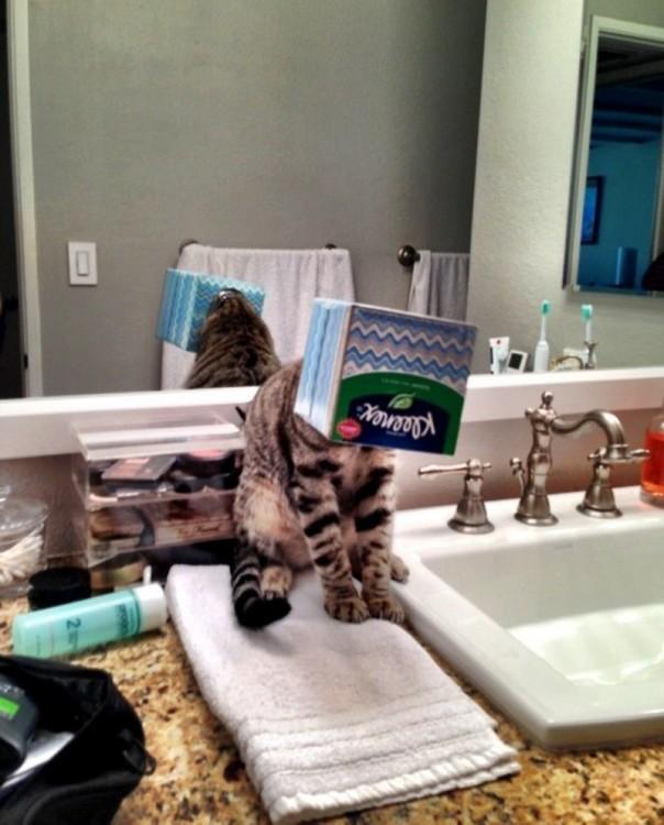 Gatos-atrapados-9-604x750