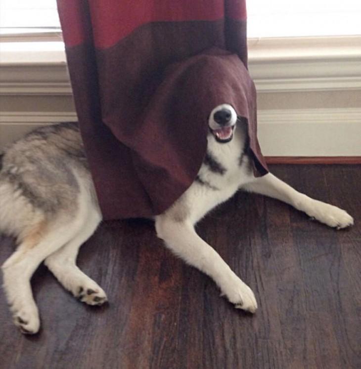 Perros-que-fayaron-al-esconderse-14-730x747