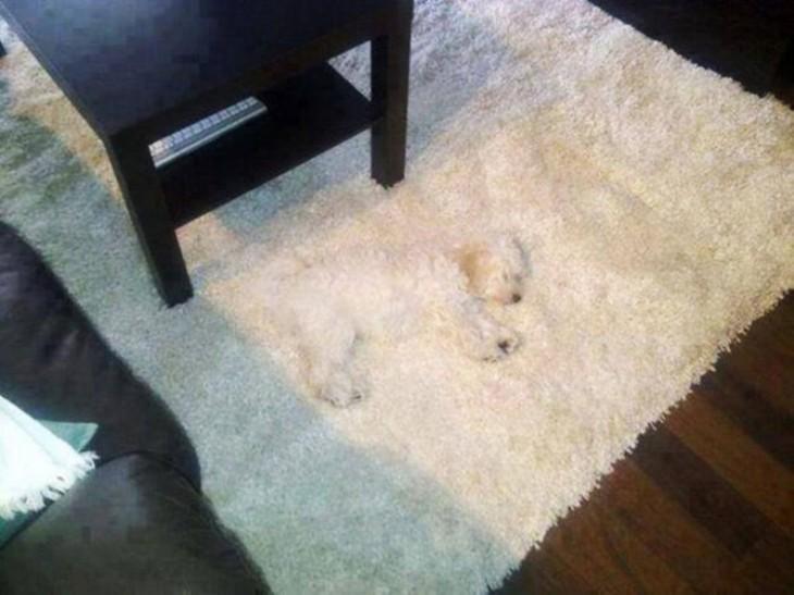 Perros-que-fayaron-al-esconderse-18-730x547