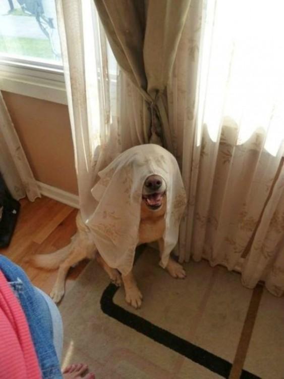 Perros-que-fayaron-al-esconderse-9-563x750