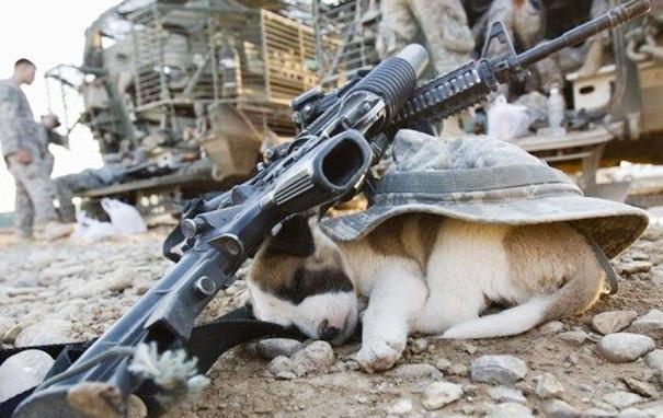 cachorros-perro-durmiendo-10