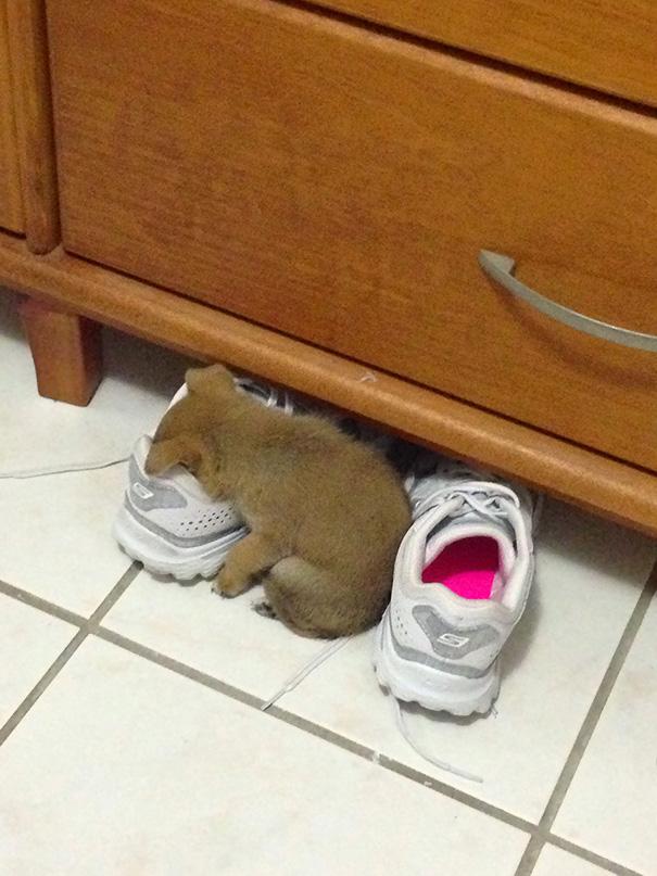 cachorros-perro-durmiendo-15