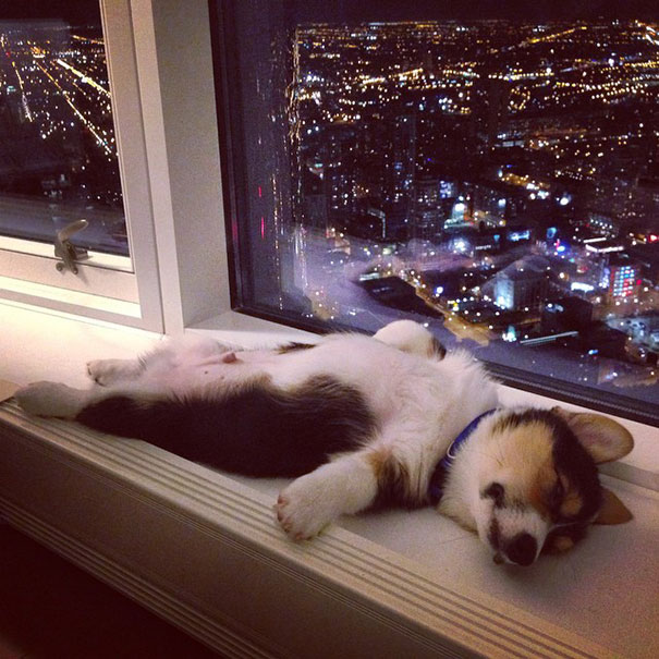 cachorros-perro-durmiendo-3