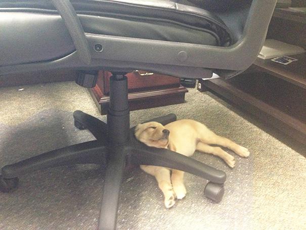 cachorros-perro-durmiendo-5