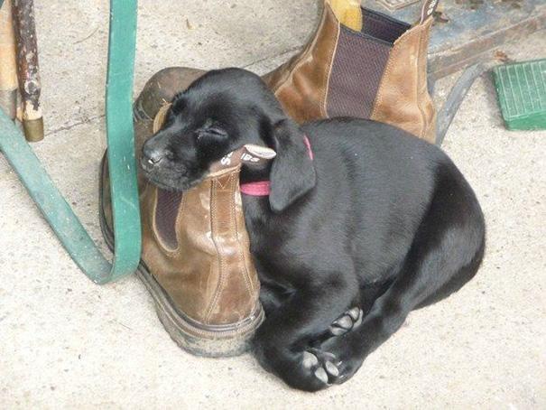 cachorros-perro-durmiendo-7