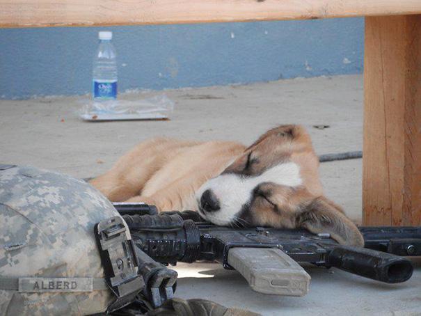 cachorros-perro-durmiendo-9