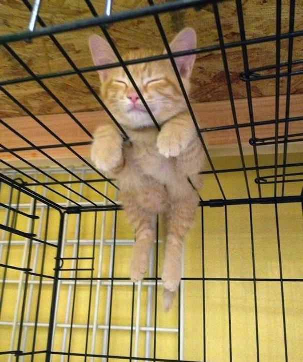 cutest-sleeping-kitties-ever-110__605