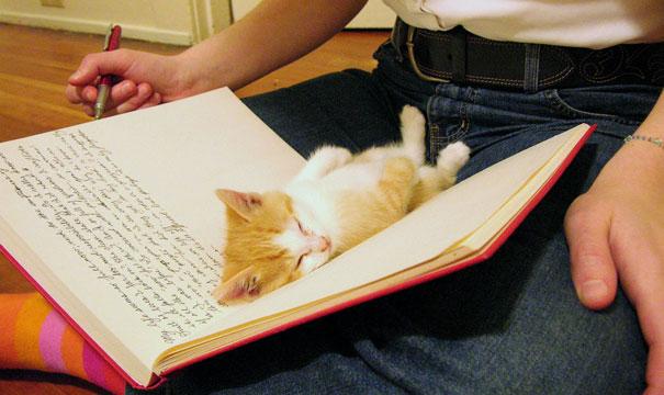 gatos-durmiendo-1