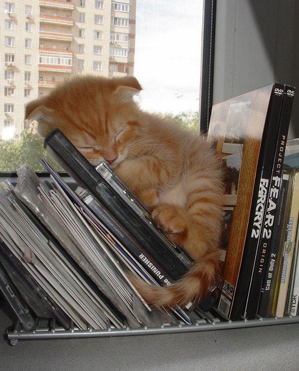 gatos-durmiendo-11