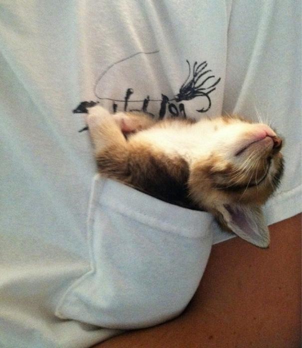 gatos-durmiendo-12