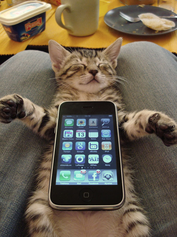gatos-durmiendo-13