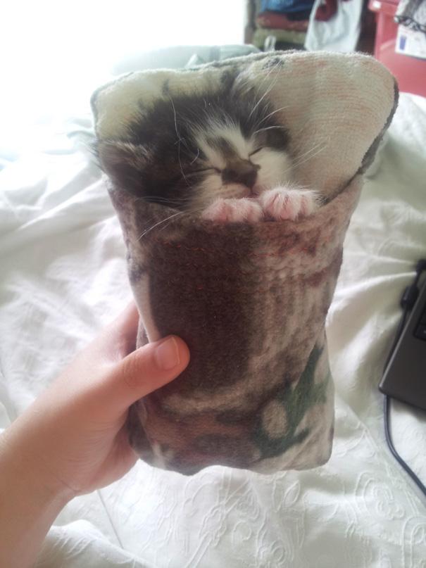 gatos-durmiendo-3