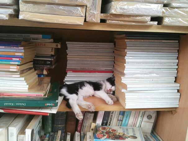 gatos-durmiendo-7