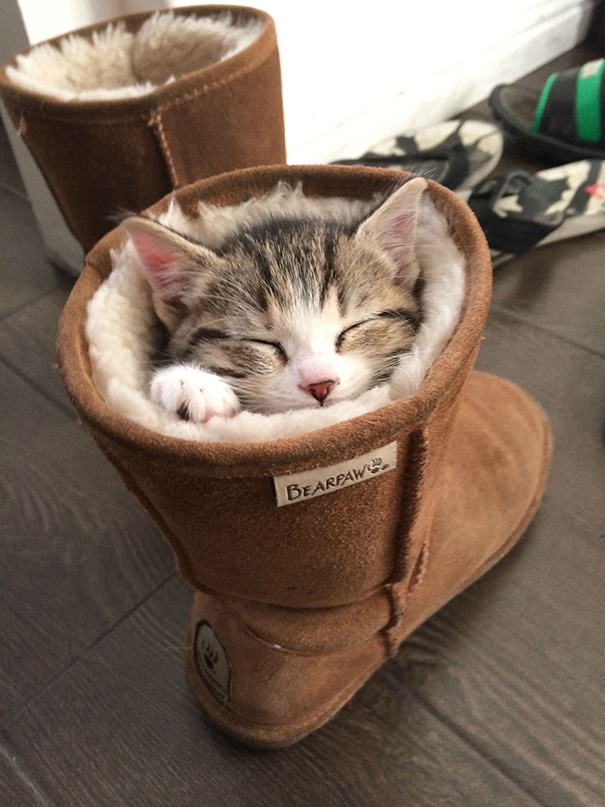 gatos-durmiendo-9