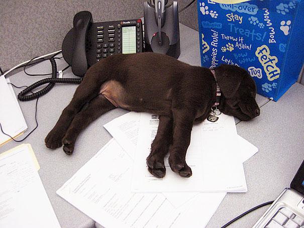 lleva-tu-perro-al-trabajo-2