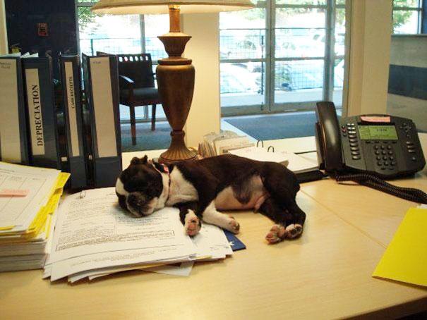 lleva-tu-perro-al-trabajo-3