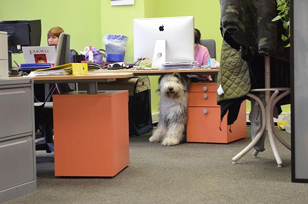 lleva-tu-perro-al-trabajo-4