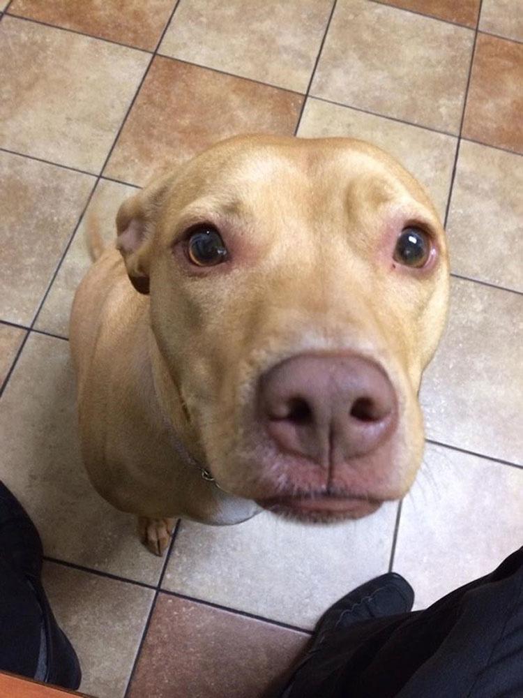 perros-veterinario-12