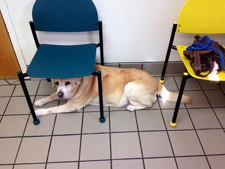 perros-veterinario-14