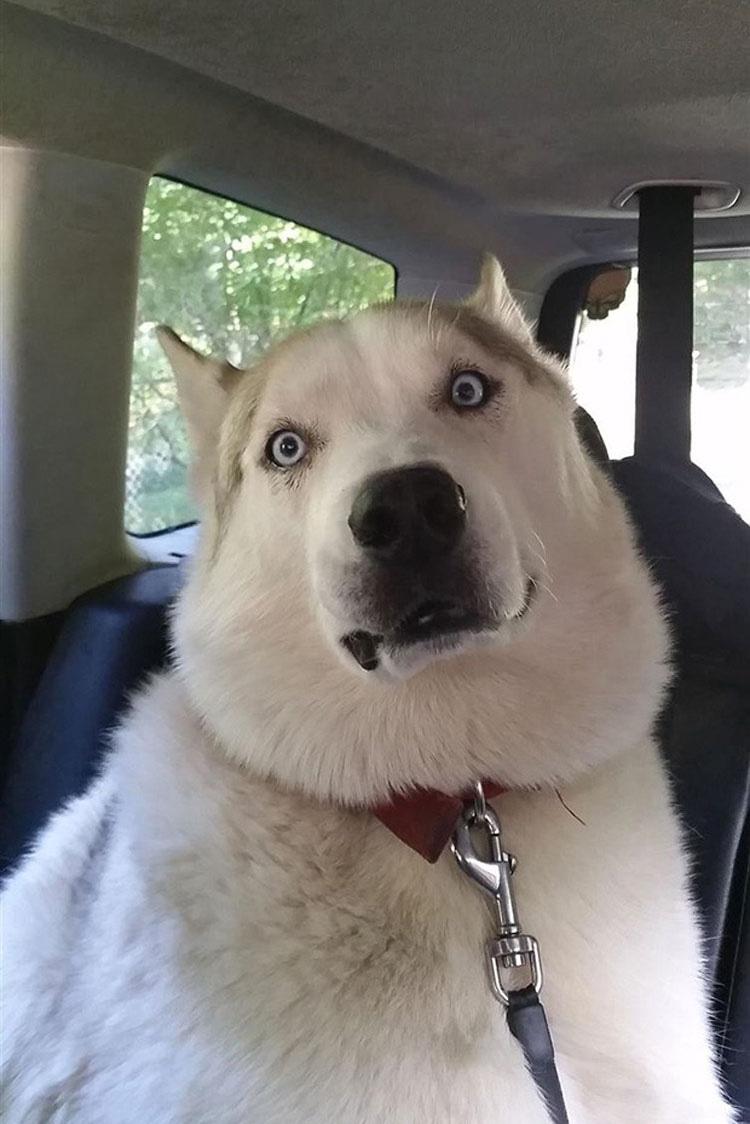 perros-veterinario-4